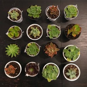Cissy's Succulents - San Diego Handmade crafts and gifts